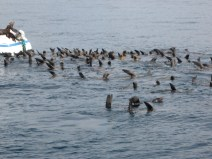 They all seem to be pointing the way - back out to sea