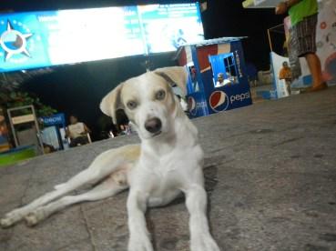 Dog at Cliff Divers Acapulco