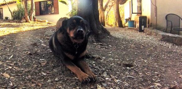 Casa Raab dog San Pablo Etla, Mexico February, 2014
