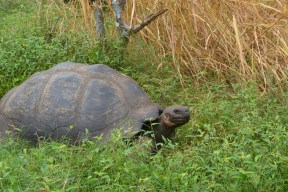 tortoise in the grass