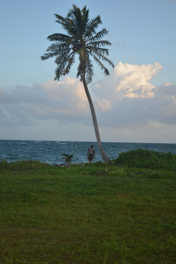 Peter and palm tree