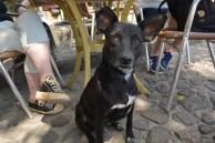 Cuban dog are great listeners. Trinidad, Cuba 2015