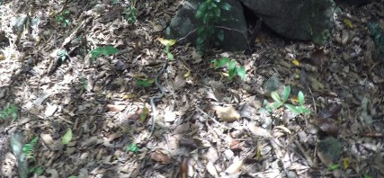 Can you see the snake? We saw tons of them.
