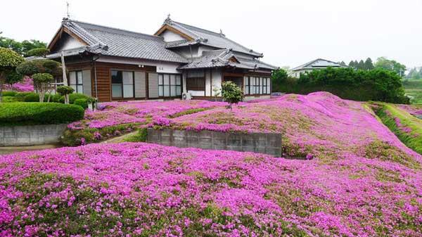 Япония-цветя