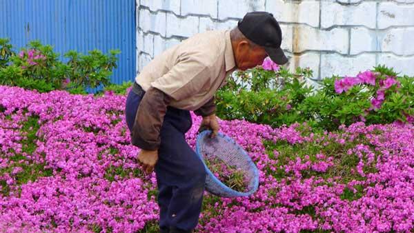 мъж-сади-цветя