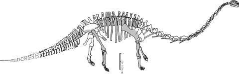 fig. 11) -- Yuanmosaurus reconstruction