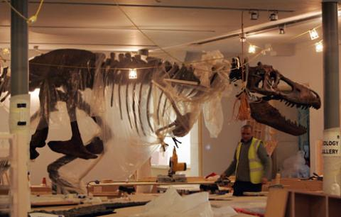 Tyrannosaurus rex mounted skeleton at the Great North Museum.  From journallive.co.uk