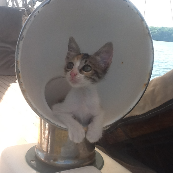Benita is turning into the perfect boat kitty!