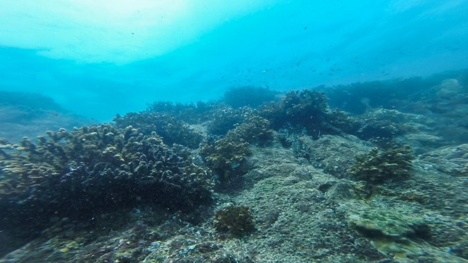 Diving in the Las Secas