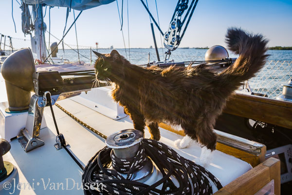 Sailing with Suki