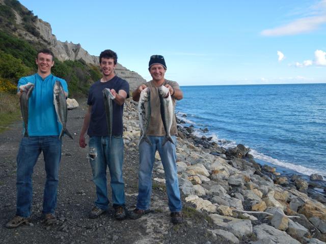 Kahawai Fish On! (5/6)