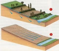 végétation anti érosion des sols