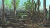 Forêt du Carbonifère (ère primaire -300Ma)
