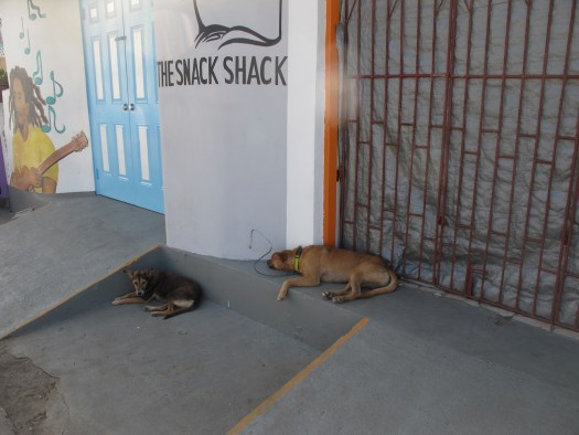 Even the dogs are pretty laid back on Union Island