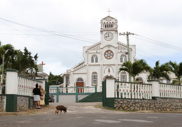 the Catholic cathedral in Neiafu, with visiting pigs