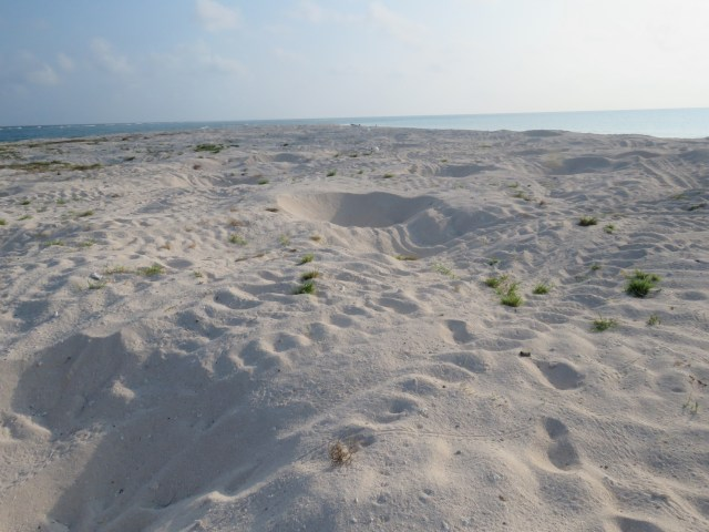 The sand cay looks like a minefield with all the turtle nests
