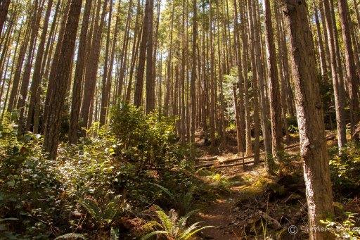 Eagle Cliff Trail