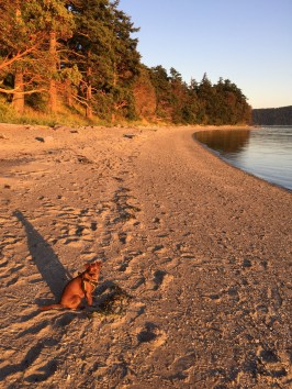 Beaches & Dogs at Sunset
