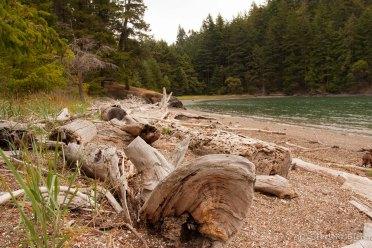 Eagle Harbor beach driftwood