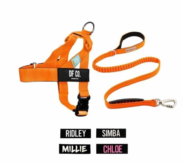 Custom harness and leash from Dog Friendly Co can be won at the Swanky Paws Charity Book Launch