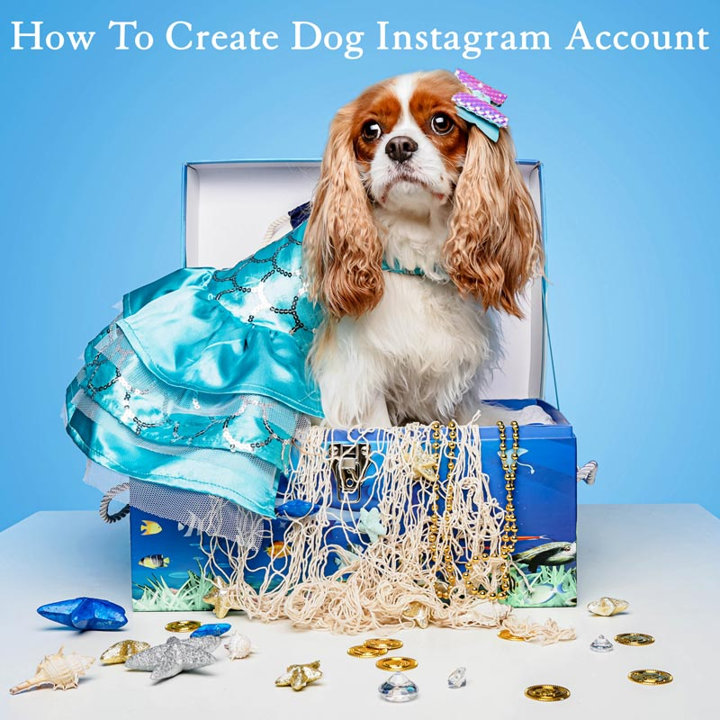Cavalier King Charles Showing how to become instagram famous by creating dog instagram account