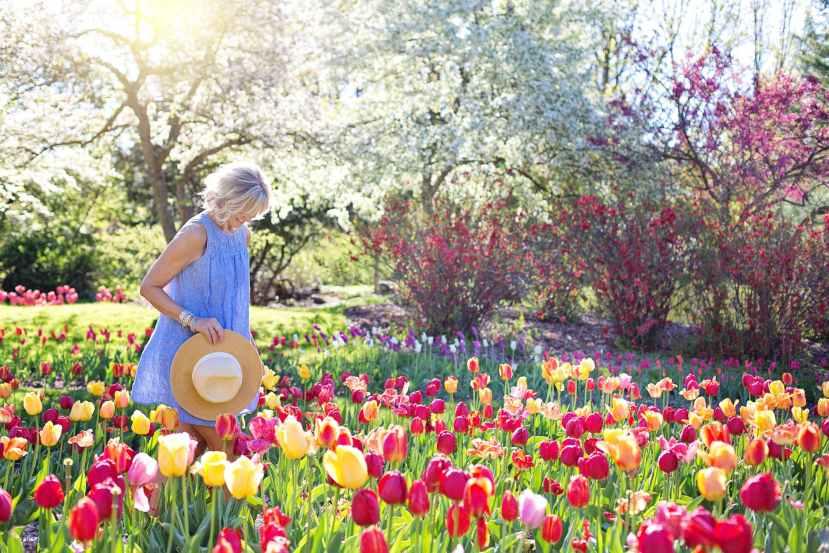 woman walking on bed of tulip flowers