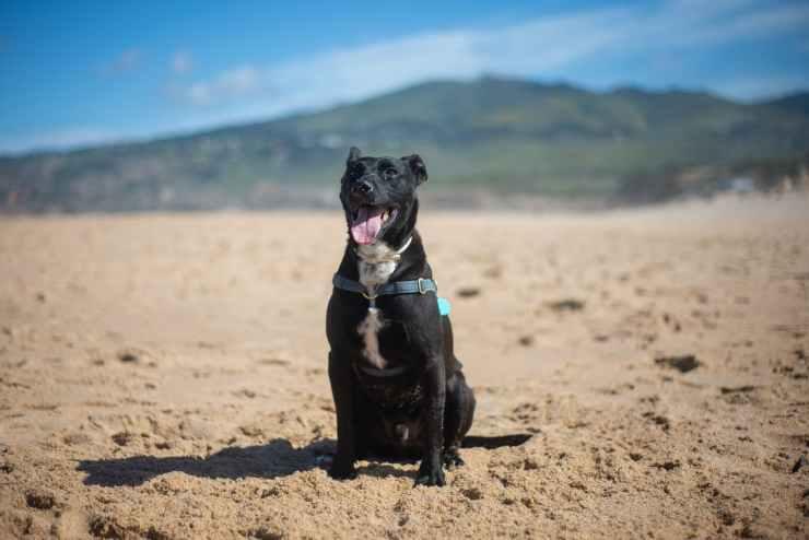 a black dog sitting on the sand