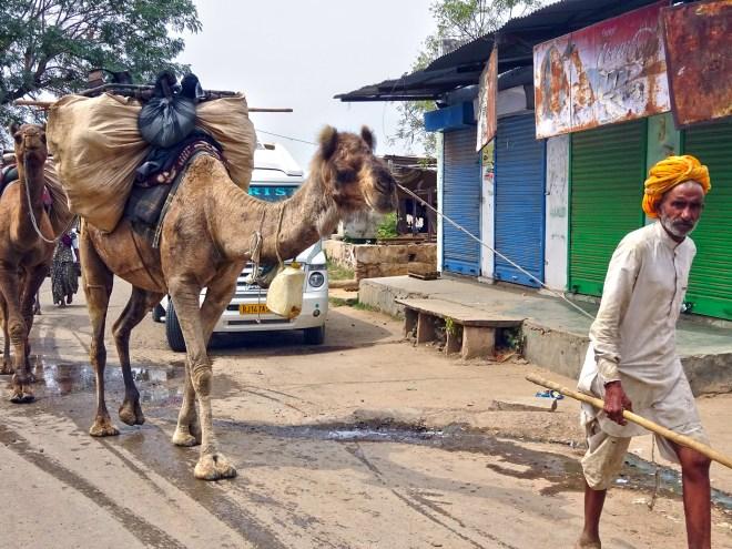 Nomads - Jaipur - 4
