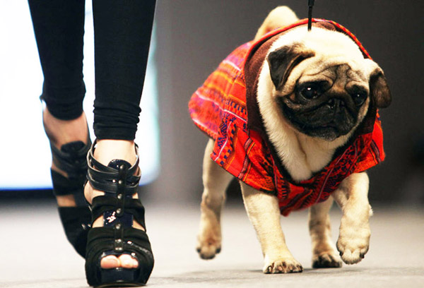 The Rise of Pet Fashion!