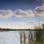 Posprzątają brzeg Jeziora Swarzędzkiego