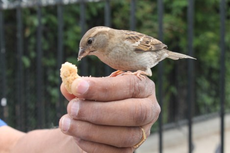 We fed sparrows!