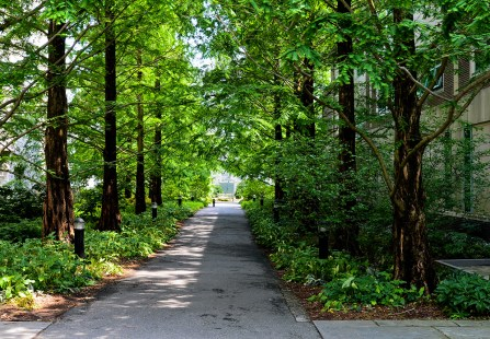 Redwood Walk.jpg