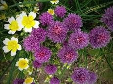 more purple flowers
