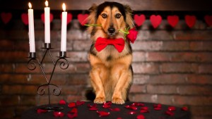 cute-dog-with-red-rose-rose-petals-and-candles-1920x1080-wide-wallpapers.net