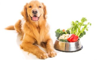 how to make golden paste for dogs