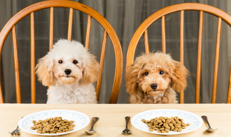 Top 10 Best Dog Food Brands In India Cheapest Best Kibble Brands In