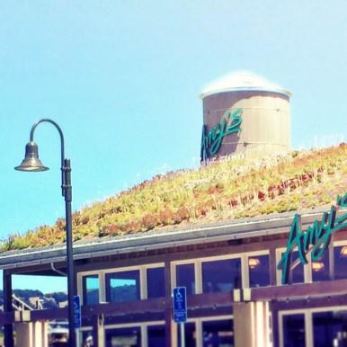 Living roof!