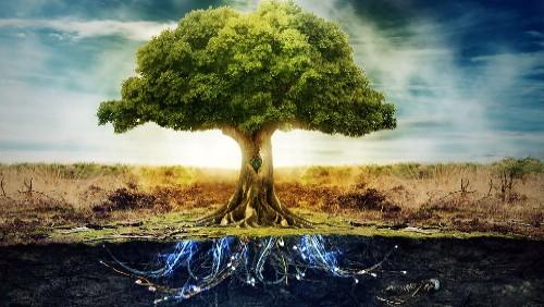 The Swedenborgian Tree Gracing Maurice Nicoll's Garden of