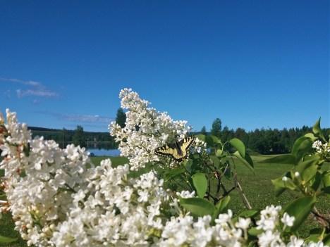 Fishing trips and birdwatching holidays near Vindeln northern Sweden
