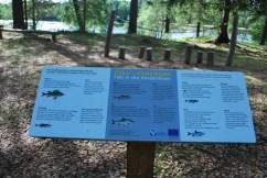 Vindeln River Perch Fish info board