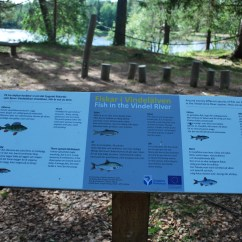 Vindeln River Perch Fish info board