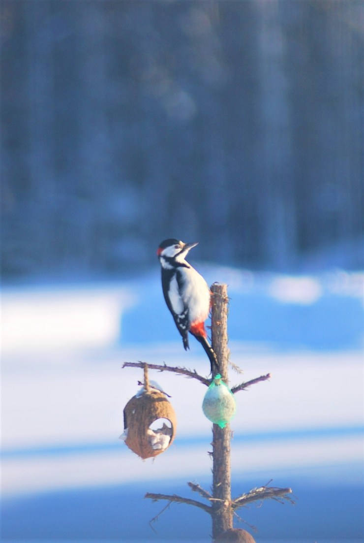 We have lots of woodpecker on site.