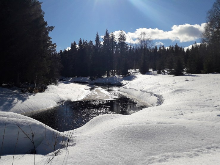 River bordering our forest by swedenfishingandbirding.
