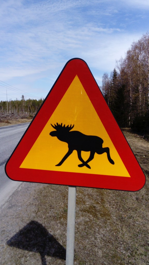 Warning Moose sign on a road near our house. Photo taken by sweden fishing and birding.