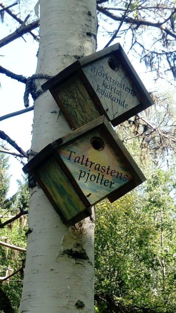 Swedish bird houses in Vindeln Nature Reserve