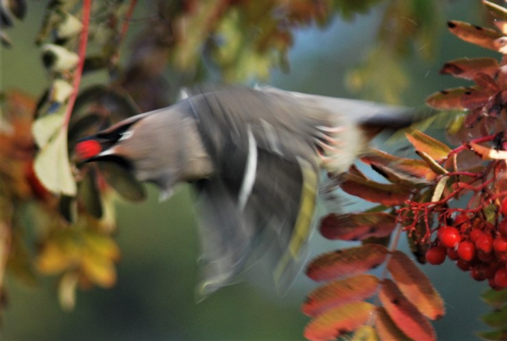 Are you on your way to visit sweden fishing and birding?