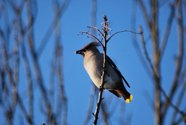 Swedish Autumn bird trip