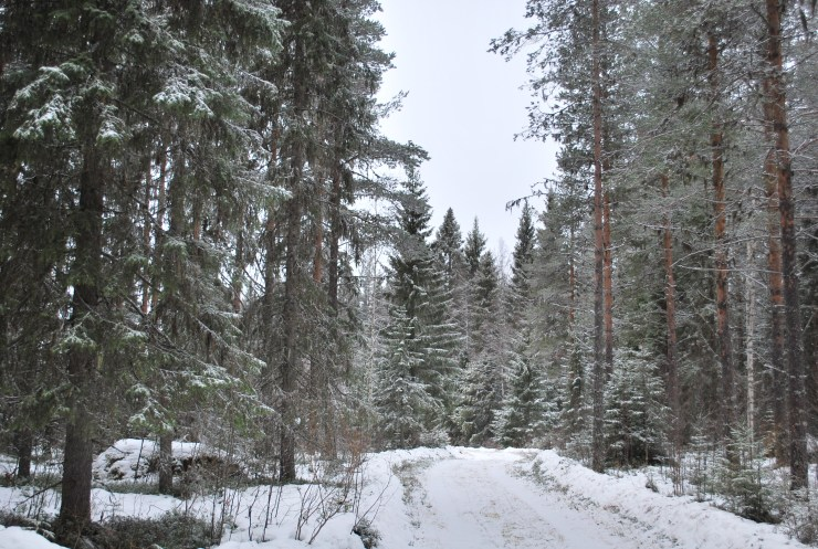 Fancy a stroll? sweden wildlife guided tour