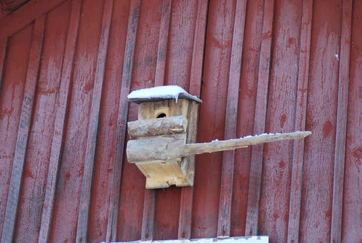 Eurasian pygmy owl (Glaucidium passerinum) nest box built and erected on site by sweden fishing and birding.