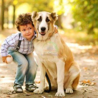 تحذير من انتشار إنفلونزا الكلاب الخطيرة